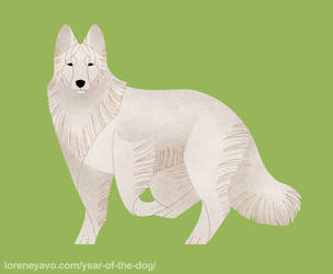 Year of the Dog - Berger Blanc Suisse by Kelgrid