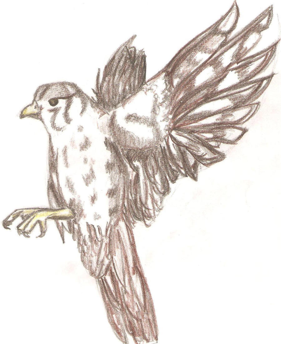 Bird Quick Sketch By LadySalmakia On DeviantArt