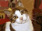 kucing-cat