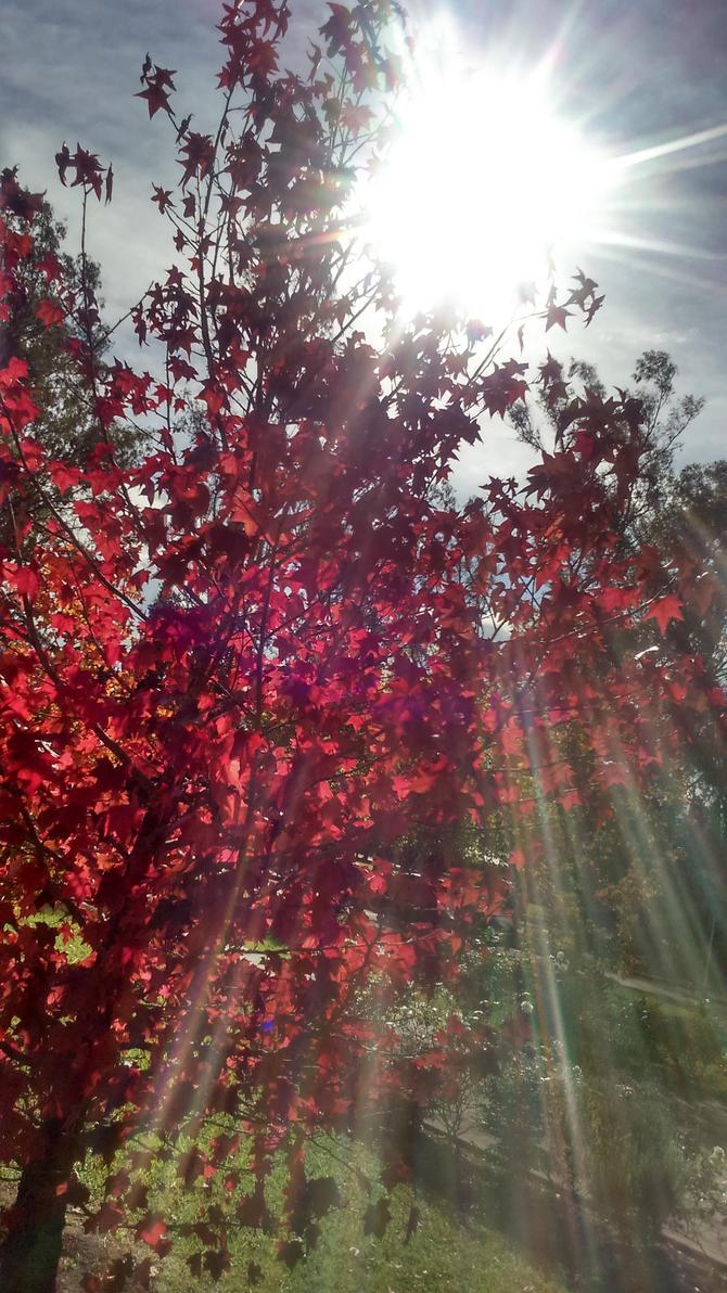 Beautiful Sunlight by Argenx