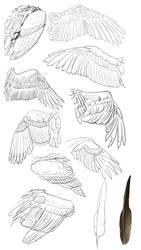 Big ol wing study by Chickenbusiness