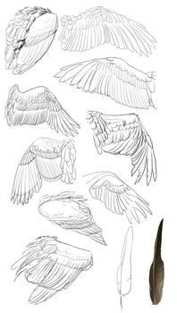 Big ol wing study