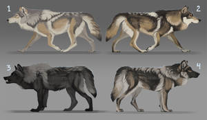 Surprise wolf adopts: CLOSED