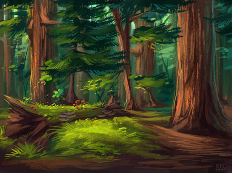 Northern call: Redwoods