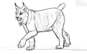 Lynx friend by Chickenbusiness