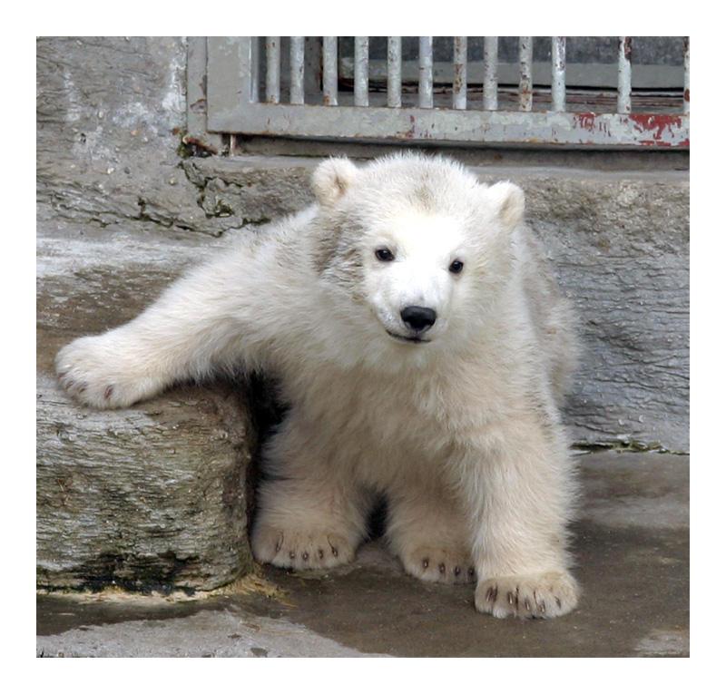 Polar Bear Cub by marble911