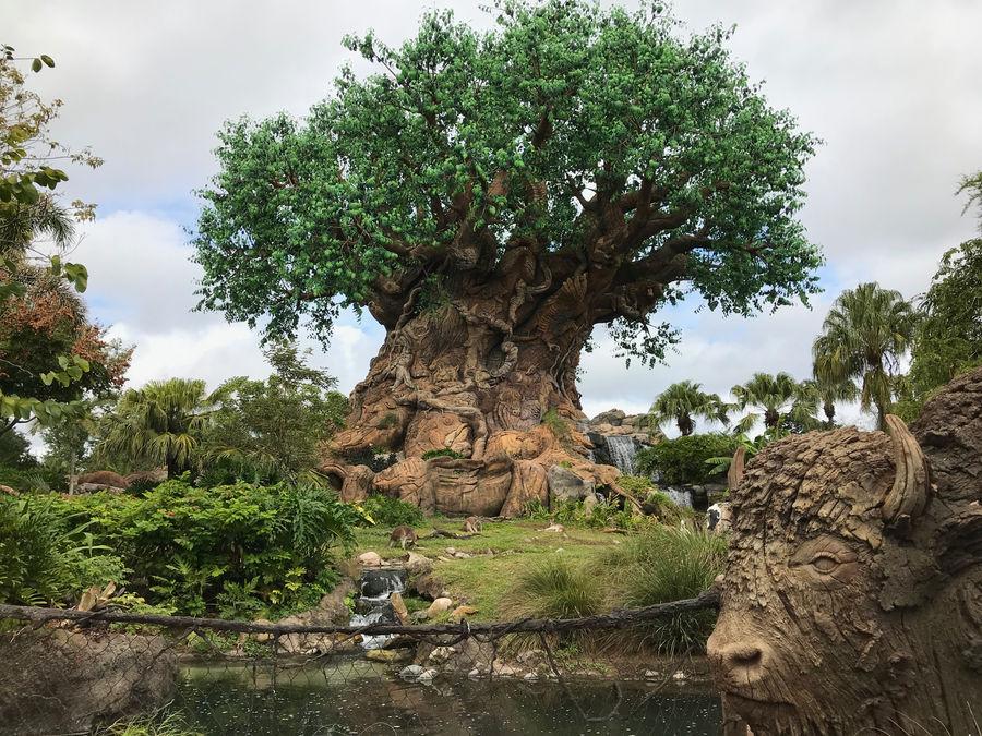 Tree of Life Landscape IMG 5063