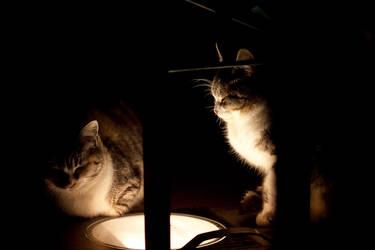 Tepore da una lampada by maikelmak