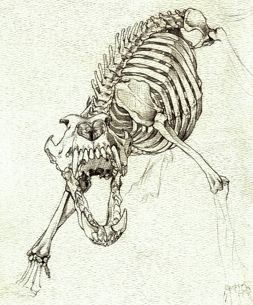 Wolf skeleton snarl by DevilsHaven
