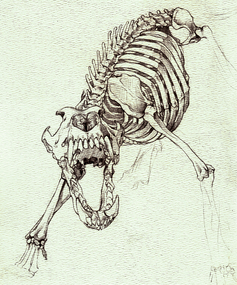 Wolf Skeleton Snarl By Devilshaven Wolf Skeleton Snarl By Devilshaven