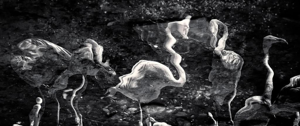 Flamingo Distortion by vamosver