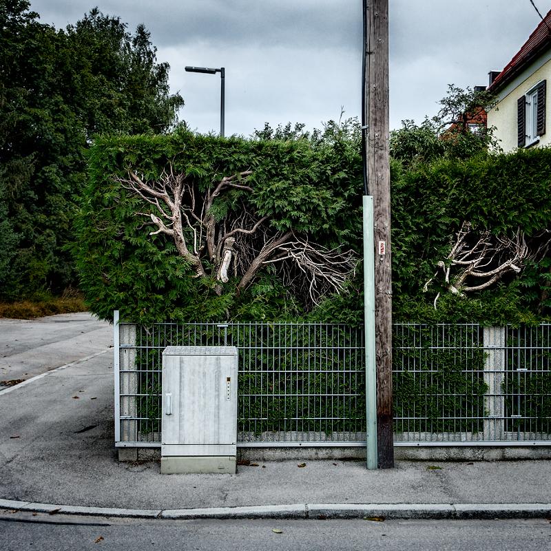 Suburban Hedge Monsters by vamosver