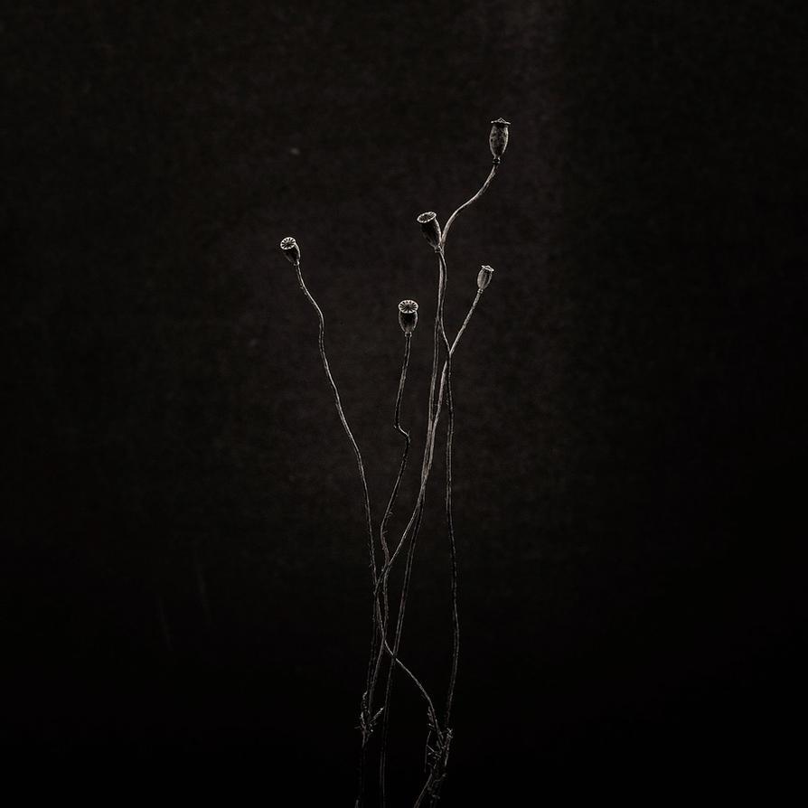 Dancers in the Dark by vamosver