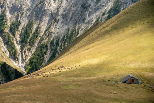 Alpes-de-Haute-Provence III