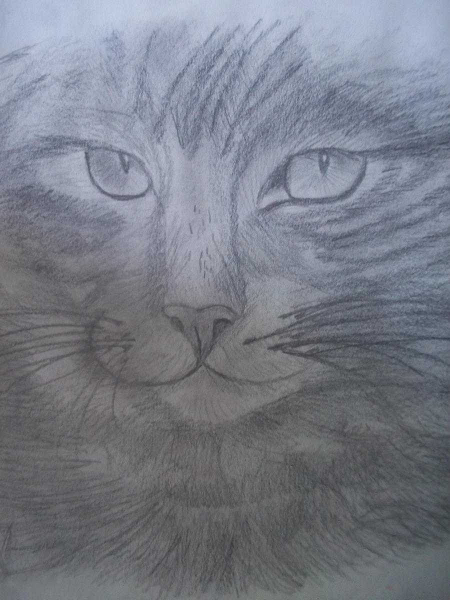 Image Result For Make Meow Great