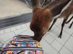 Pickpocket deer