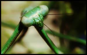 Mr Mantis