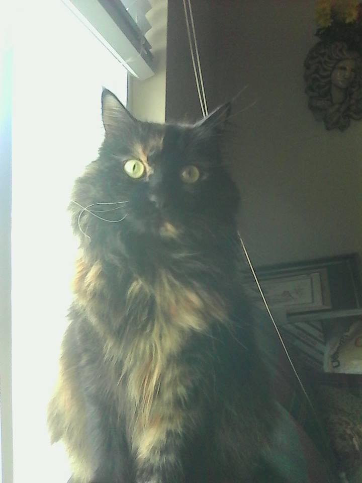 Ehhhhhhh Best Dumb Cat by Lawleitspuppy