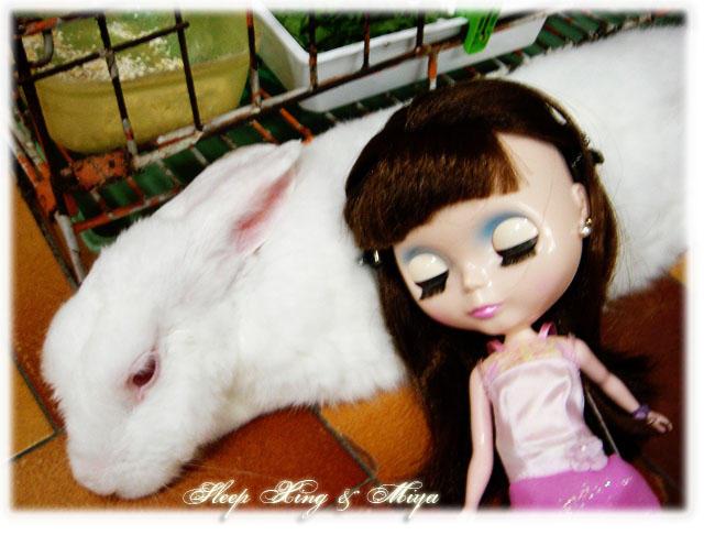 Ah Xing Sleepy with Miya by Asaciel