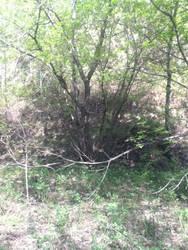 Adopt a Rp forest bid