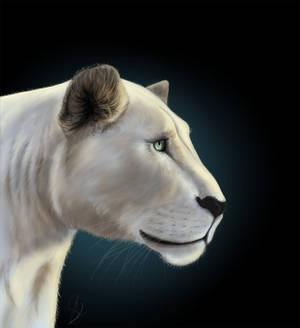 GG Conservation_Lionness