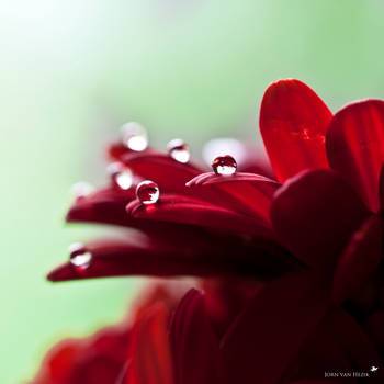The beauty of nature II by VisualArtist-Jorn