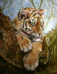 tiger cub hanging out