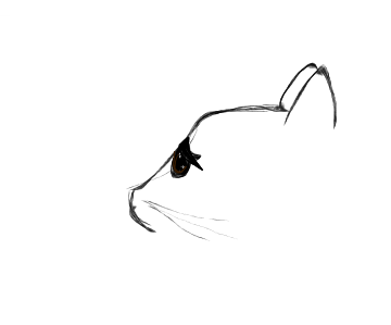 Cat outline by randomcatonline