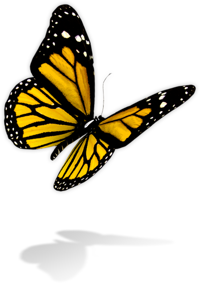 yellow butterfly png flying bird clipart png flying bird clipart silhouette