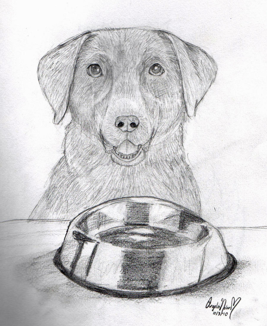 Chocolate Lab by *AngecondaBite on deviantART