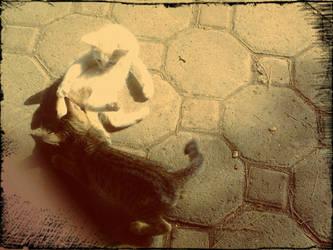 Playing Kittens by matzenmatzen