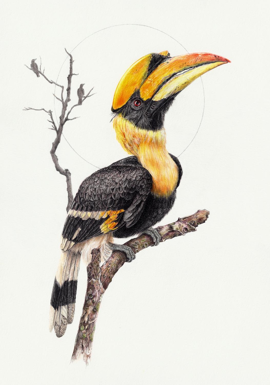 Great Hornbill By Zephyrxavier On DeviantArt
