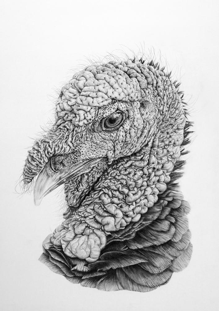 Turkey by zephyrxavier