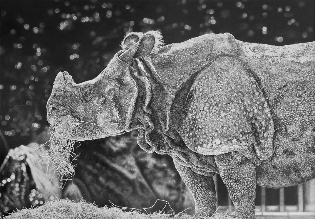 Rhino by zephyrxavier