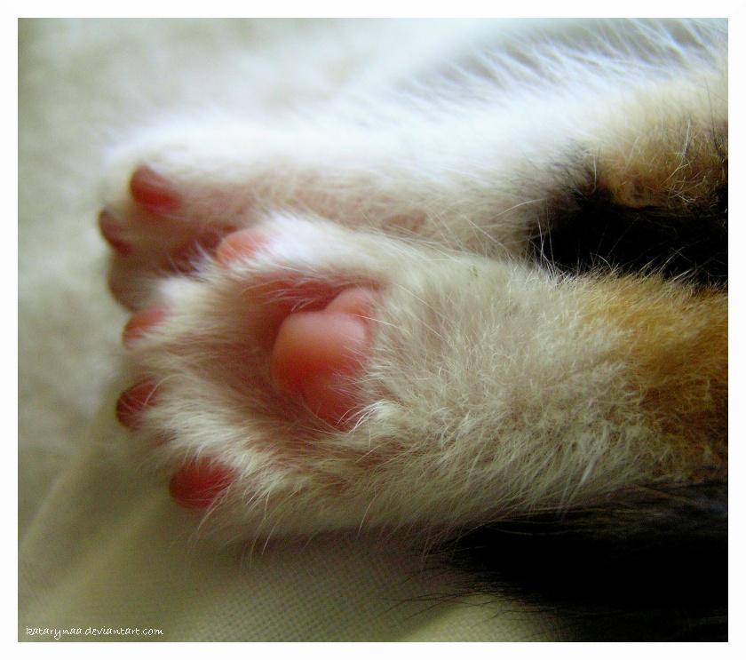 Paws by Katarynaa