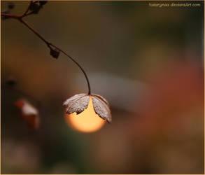 Lampion by Katarynaa