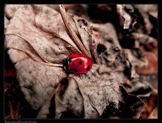 Ladybird Part III by Katarynaa