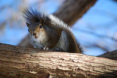 Squirrel just staring at me by philinchilin