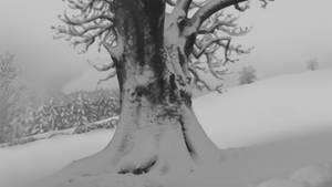 // STUDY - Snowy Tree