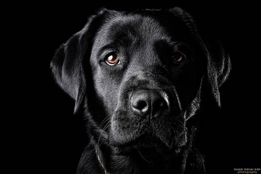 The Black Lab II