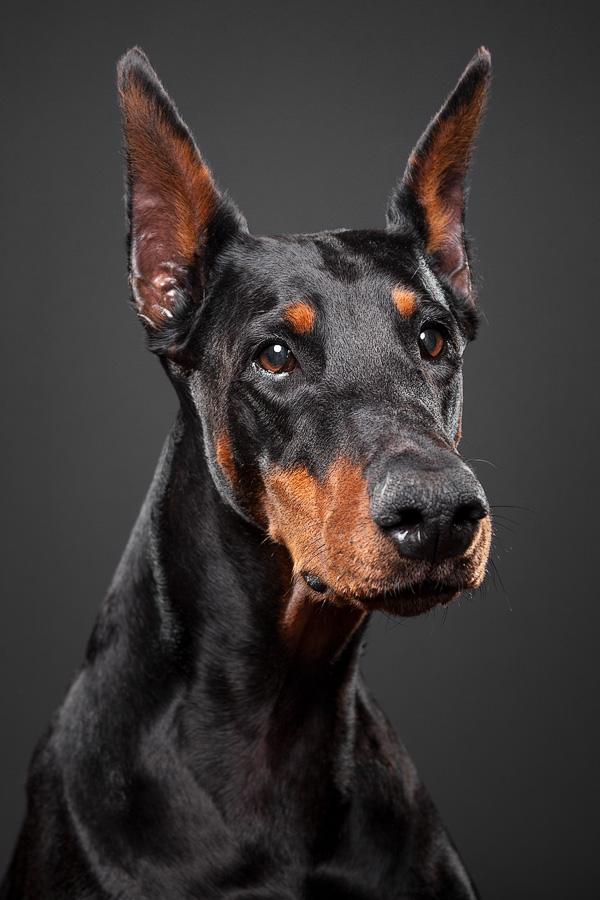 Vicious Dogs Names Name of Dog Jasper