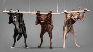 Canine athletes
