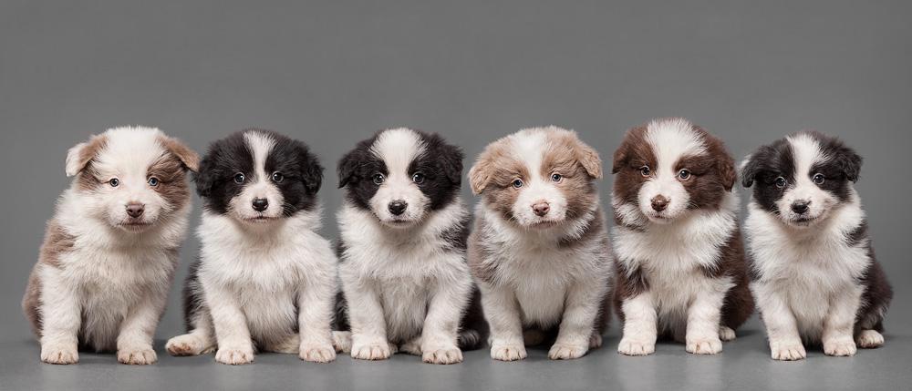 Pups II by Wordup