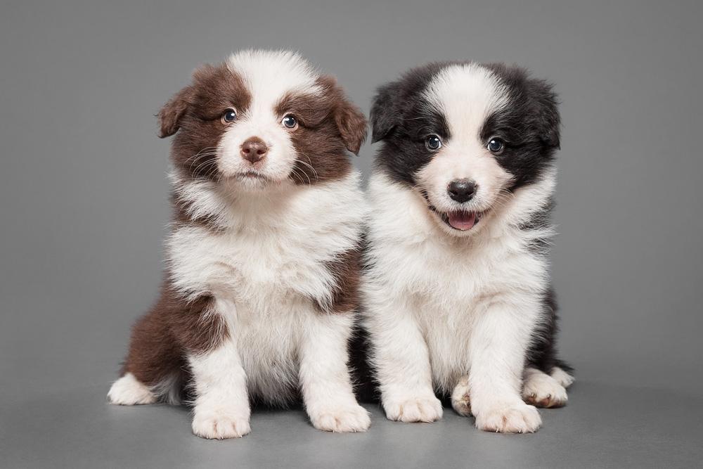 Pups III by Wordup