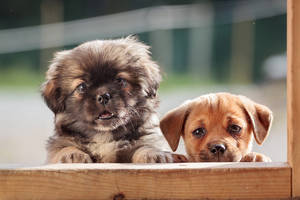 Cutest Puppies Ever by Wordup