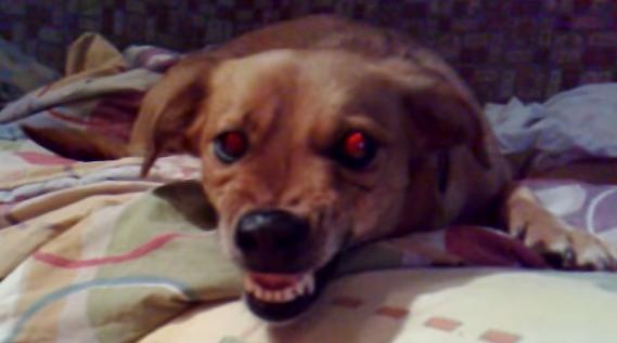 Cute dog by 1Diamant