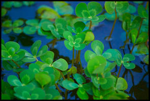 Lucky Water by SayaStarshine