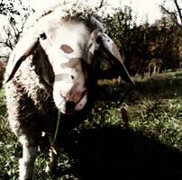 Meadow Mayhem Inlay
