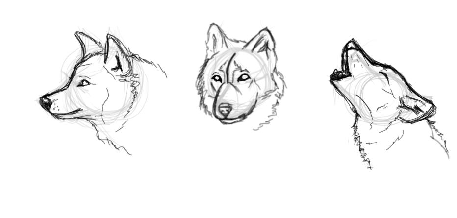 Wolf Practice Sketches by verlak on DeviantArt
