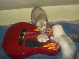 my ferrets by frankieroisyummy